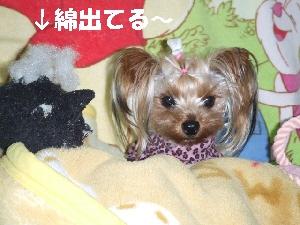 2008_0123 はる0073.jpg