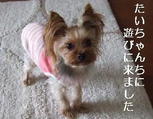2008_0212 はる0052.JPG