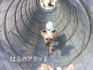 2008_0303 はる0094.jpg