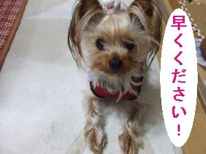 2008_0327 はる0057.jpg