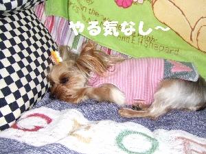 2008_0328 はる0051.jpg
