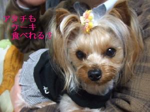 2008_0328 はる0067.jpg