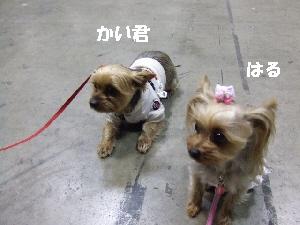 2008_0330 はる0051.jpg