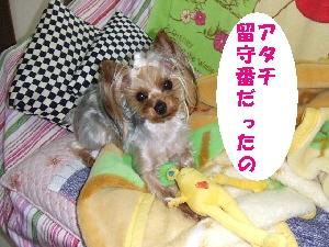 2008_0330 はる0074.jpg