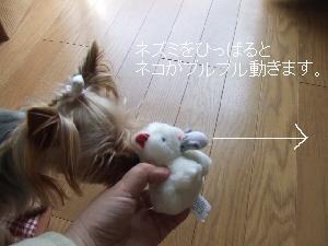 2008_0402 はる0033.jpg