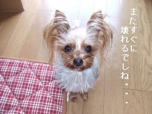 2008_0402 はる0039.jpg