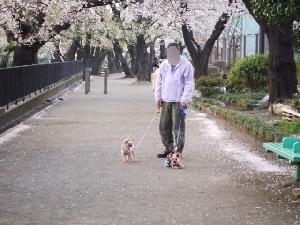 2008_0407 はる0061.jpg