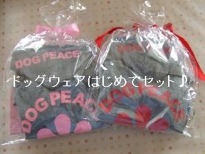 2008_0414 はる0035.jpg