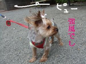 2008_0501 はる0039.jpg