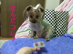 2008_0501 はる0044.jpg