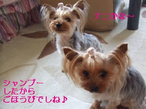 2008_0601 はる0027.jpg