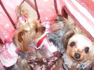 2008_0617 はる0029.jpg