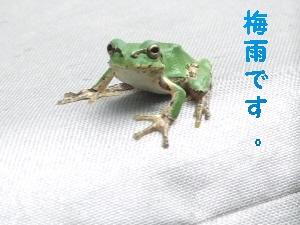 2008_0623 はる0046.JPG