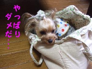 2008_0623 はる0048.jpg
