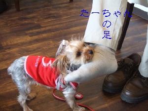 2008_0630 はる0046.jpg