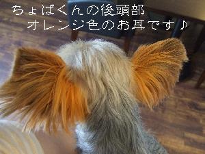 2008_0630 はる0052.jpg