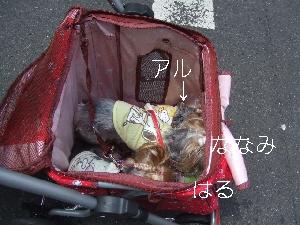 2008_0803 はる0056.jpg