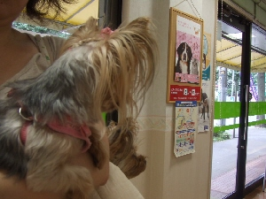 2008_0901 はる0037.jpg