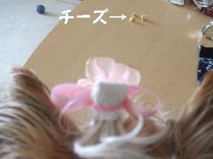 2008_0902 はる0050.jpg