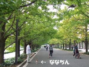 2008_1022 はる0041.JPG