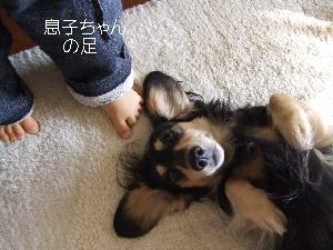 2008_1118 はる0014.jpg