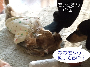 2008_1118 はる0020.jpg
