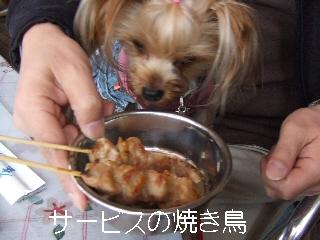 2008_1125 はる0010.jpg