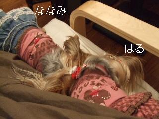 2008_1125 はる0026.jpg