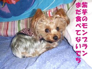 2008_1211 はる0018.jpg