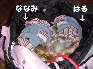 2008_1212 はる0036.jpg