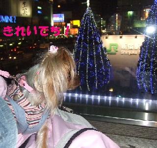 2008_1212 はる0091.JPG