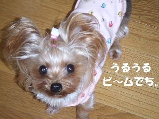2008_1215 はる0014.jpg