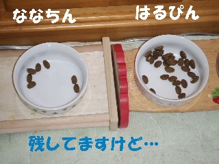 2008_1215 はる0016.jpg
