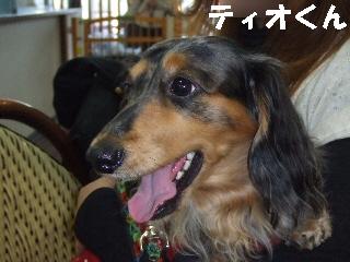 2008_1216 はる0007.jpg