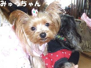 2008_1216 はる0032.jpg