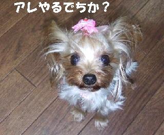 2008_1216 はる0037.JPG