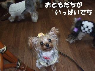 2008_1216 はる0051.jpg