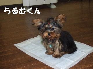 2008_1216 はる0059.jpg