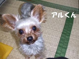 2008_1216 はる0065.jpg