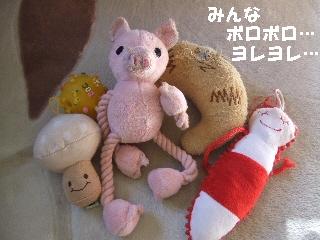2008_1219 はる0022.jpg