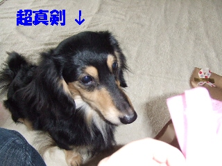 2008_1222 はる0016.jpg