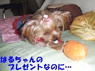 2008_1222 はる0020.jpg