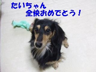 2008_1222 はる0025.jpg