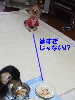 2008_1222 はる0041.jpg