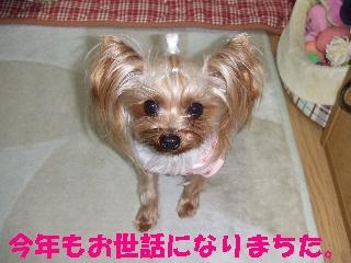 2008_1230 はる0017.jpg