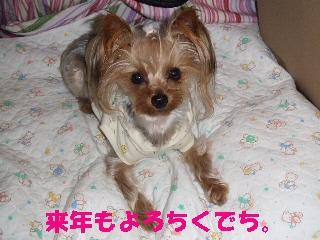 2008_1230 はる0020.jpg