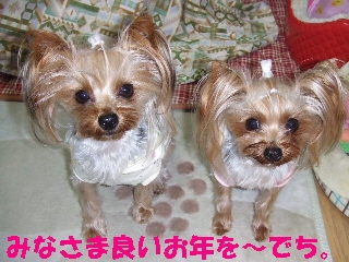 2008_1230 はる0022.jpg