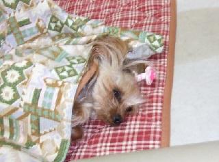 2009_0114 はる0012.JPG