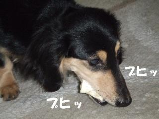 2009_0227 はる0043.jpg