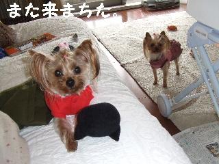 2009_0401 はる0063.jpg